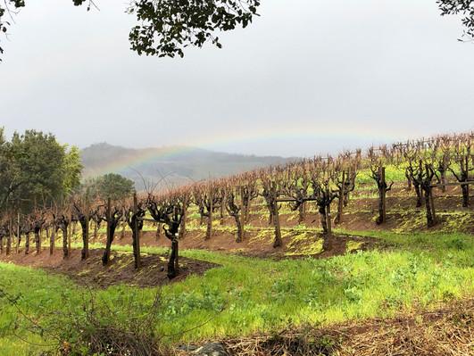 Vineyard-Winter-Rainbow.jpg
