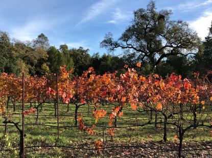 Vineyard-Red-Leaves-Fall-View.jpg