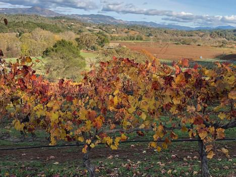 Vineyard-Near-Far-View-Fall.jpg