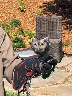 Owl Demo.jpg