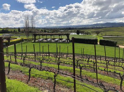 Vineyard-wTasting-Terrace-Long-View-Sunn