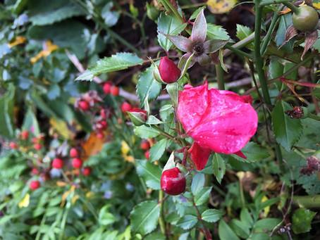 Surprises in the Garden