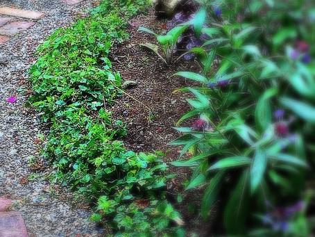 Waging War on Weeds, Part Three