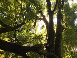 tree, Karen L Higgins