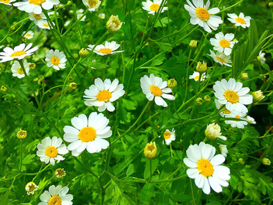 The Necessity of White Flowers