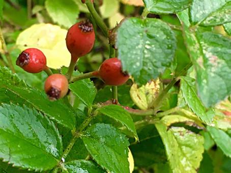 An Autumn Garden