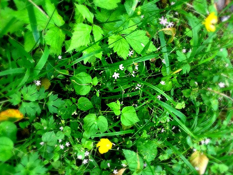 Waging War on Weeds