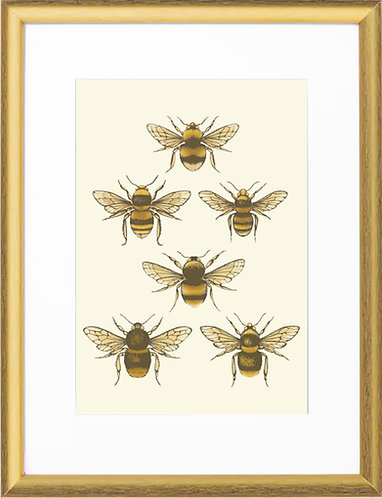 'British Bees' Fine Art Print