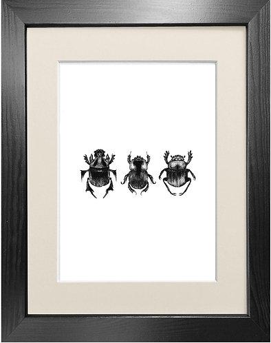 'Dung Beetles' - Fine Art Print