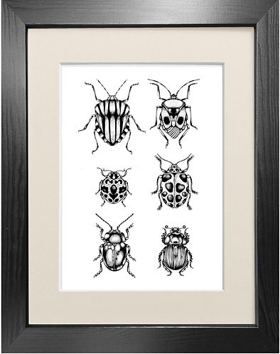 'British Beetles' Fine Art Print
