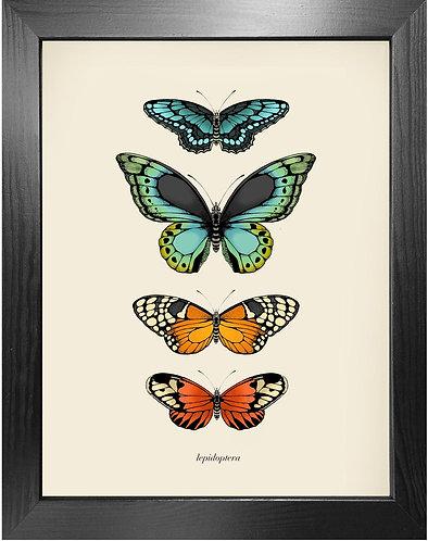 'Antique Tropical Butterflies II' Fine Art Print