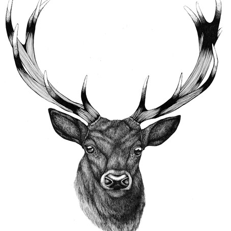 DRAWING TUTORIAL: How to Draw a Stag