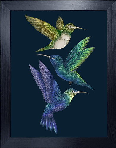 'Antique Hummingbirds II' Indigo Fine Art Print