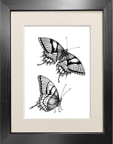 'Antique Butterflies' - Fine Art Print