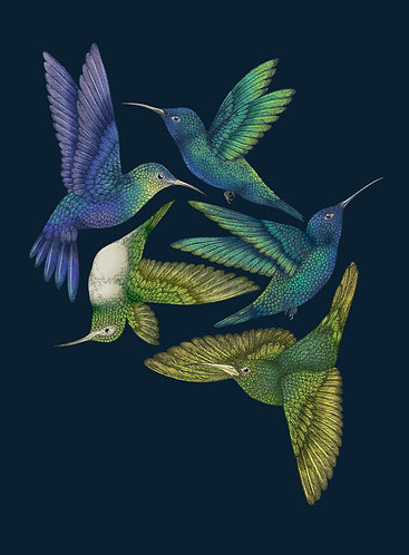 'Antique Hummingbirds I' Indigo Fine Art Print