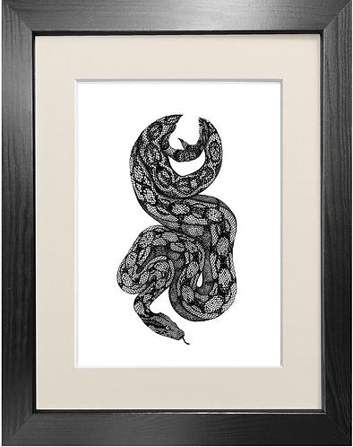 'Boa Constrictor' - Fine Art Print