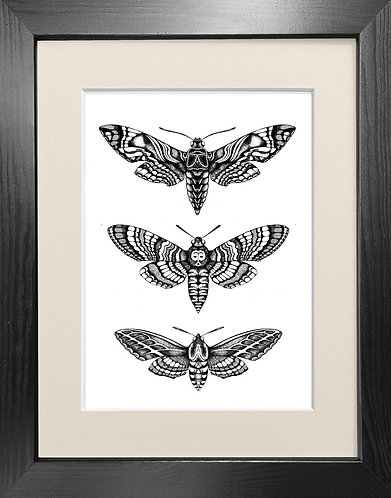 'Hawk Moths' Fine Art Print