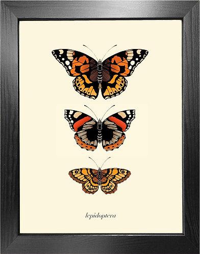 'Antique British Butterflies II' Fine Art Print