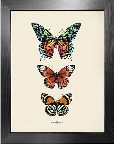 'Antique Tropical Butterflies I' Fine Art Print