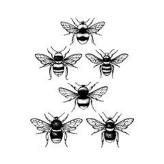 bees A42.jpg