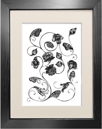 'Magellanicadoptera' - Fine Art Print