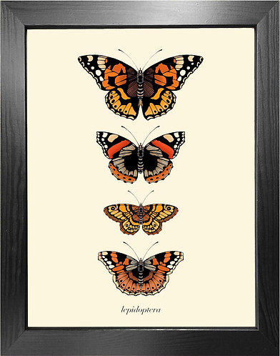 'Antique British Butterflies IV' Fine Art Print
