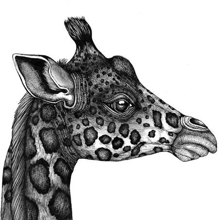 DRAWING TUTORIAL: How to Draw a Giraffe