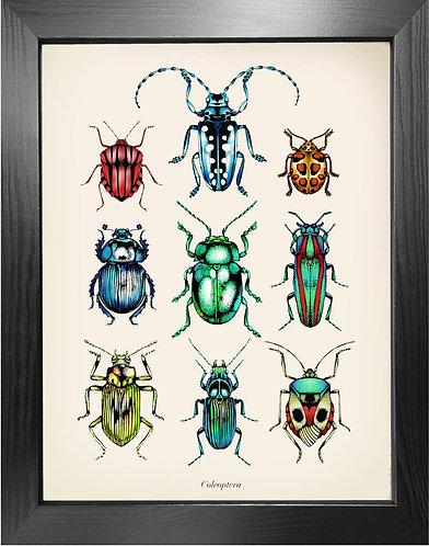 'Antique Tropical Beetles' Fine Art Print
