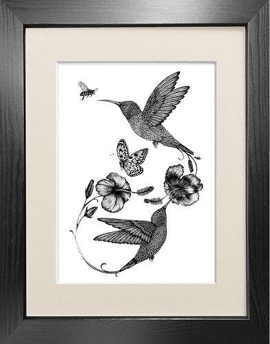 'Hummingbird & Hibiscus' - Fine Art Print