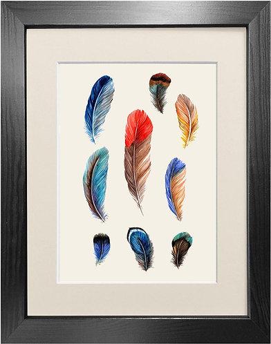 'Feathers' Fine Art Print