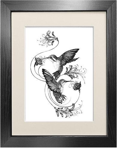 'Hummingbirds & Honeysuckle' - Fine Art Print