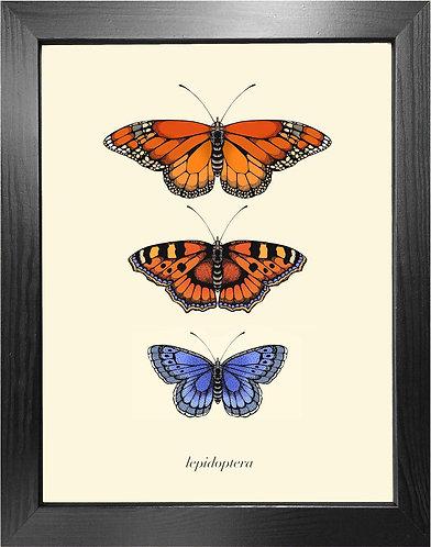 'Antique British Butterflies I' Fine Art Print