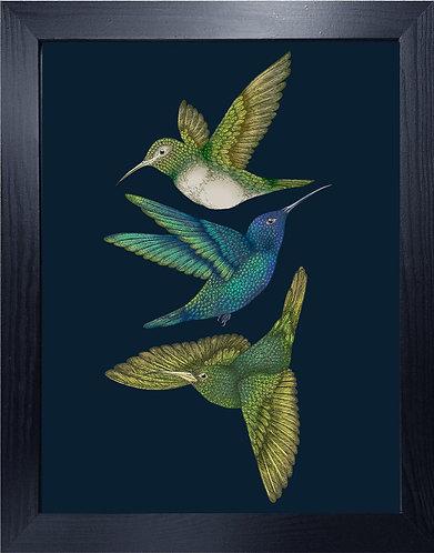 'Antique Hummingbirds III' Indigo Fine Art Print