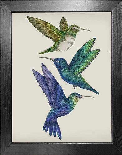'Antique Hummingbirds II' Fine Art Print