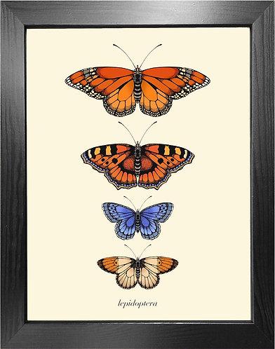 'Antique British Butterflies III' Fine Art Print