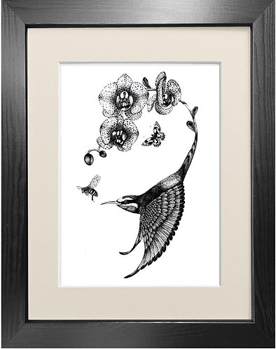 'Apiaster Orchidae' - Fine Art Print