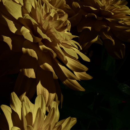 PHOTOGRAPHY: Floral Still Life