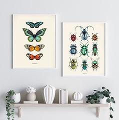 Tropical Beetles, Butterflies.jpg