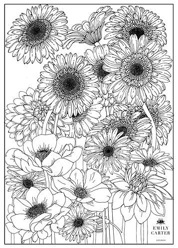 Gerbera Garden Colouring Page