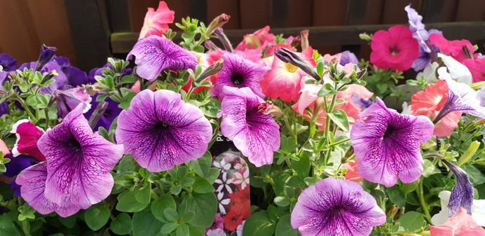 Cafe, Plant Nursery, Garden Center