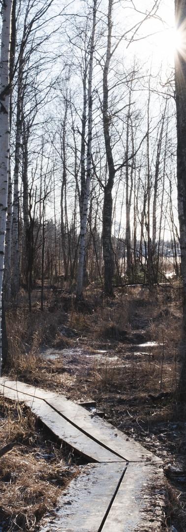 Keväisen metsän läpi johtavat pitkospuut. Lehdettömät puut, auringonpaiste, vähän lunta maassa.
