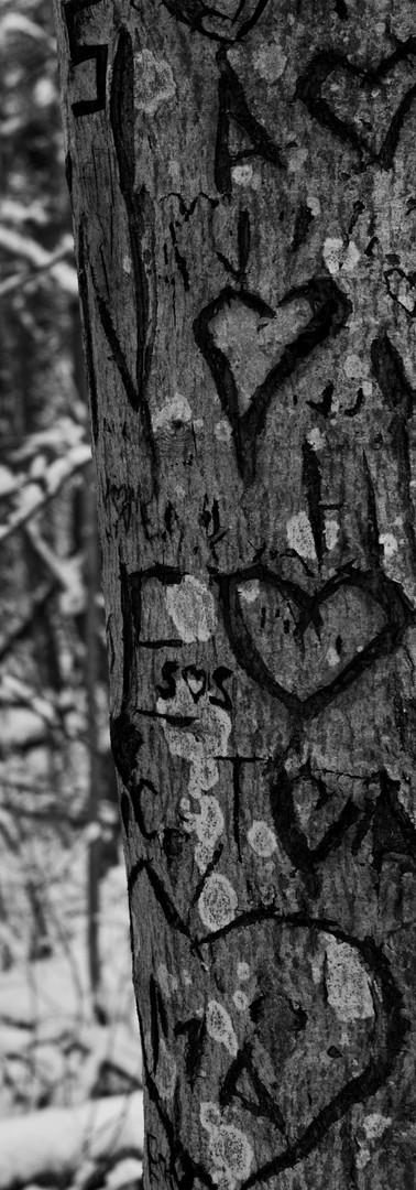 Puun runko, jossa kaiverruksia nimikirjaimista ja sydämistä.