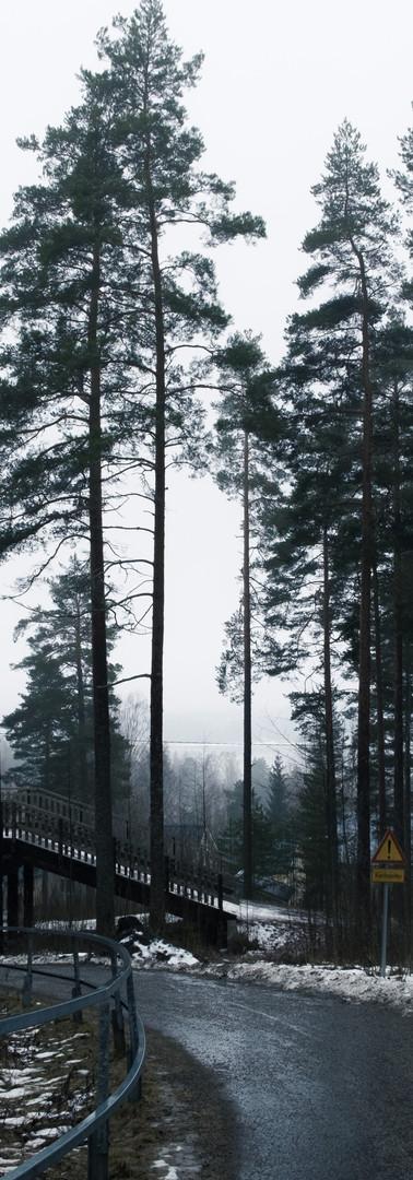 Harmaa ja keväinen metsän keskellä kulkeva kävelytie ja sen yli kaartuva ylikulkusilta.