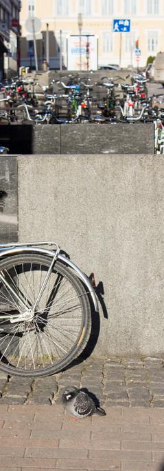 Keskustassa sijaitseva pyöräparkki, etualalla polkupyörä, jonka vieressä seisoskelee pulu.