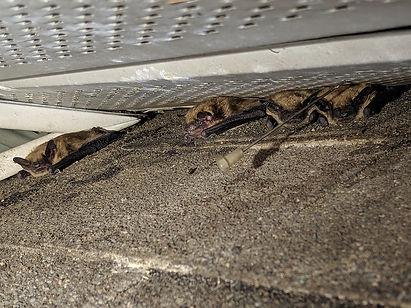 bat-colony.jpg