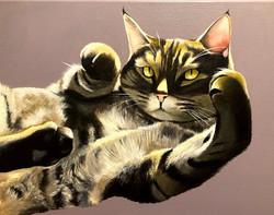 Striped Cat 2020