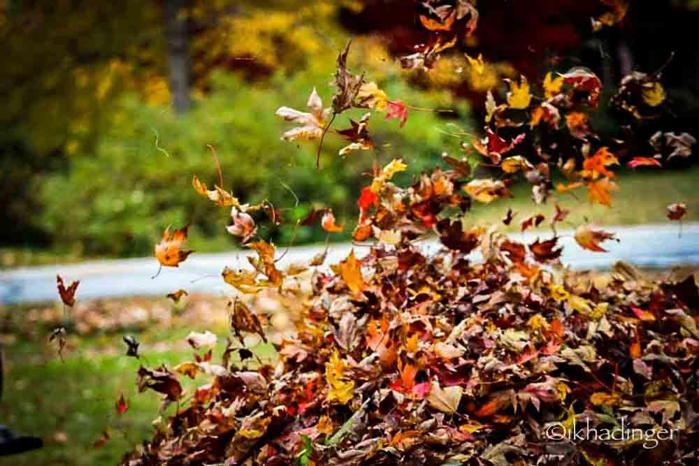 autumn2014_metroparks-14