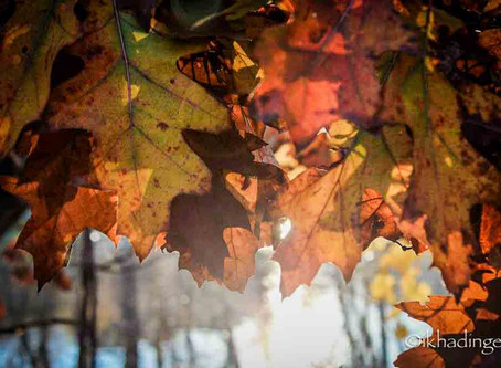 Autumn Leaves: A Reminder of Rest