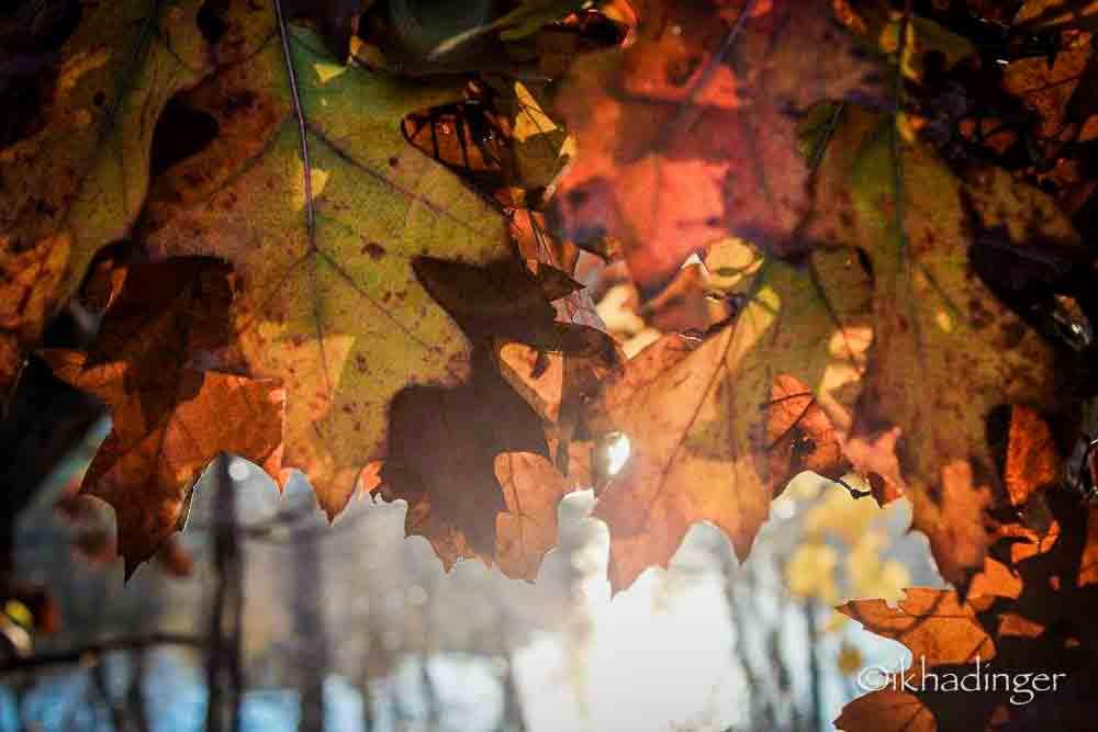 autumn2014_metroparks-12