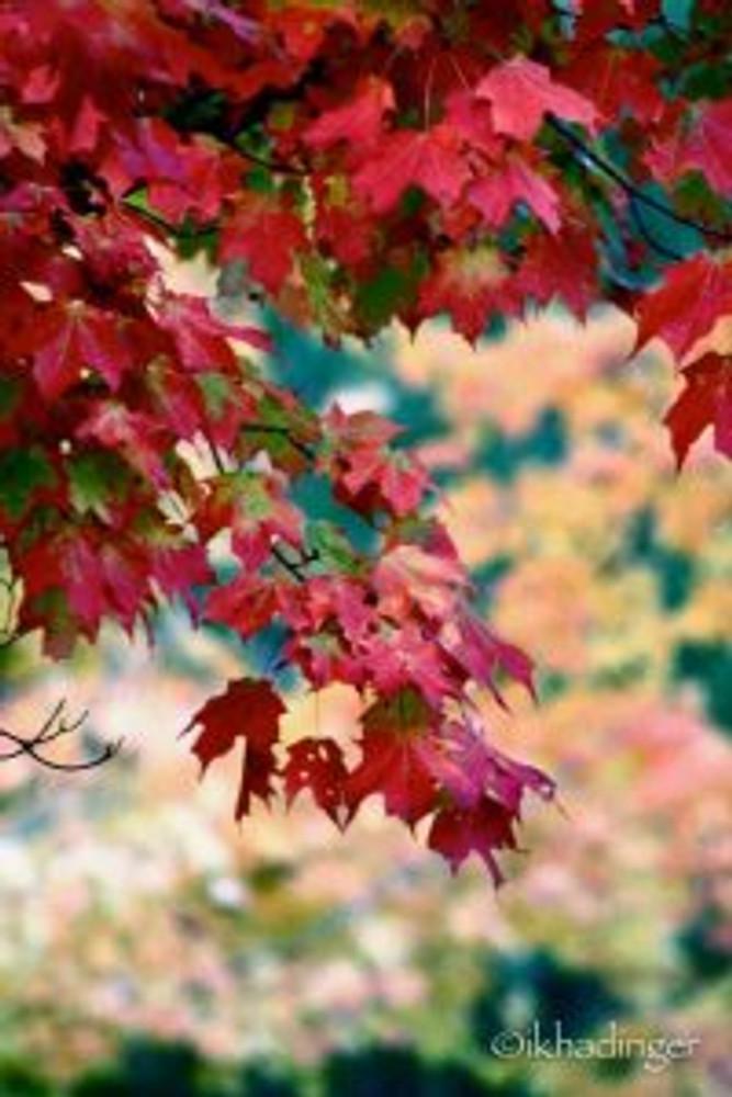 autumn2014_metroparks-11